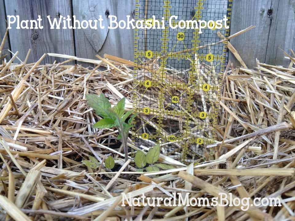 bokashi compost experiment plant without bokashi