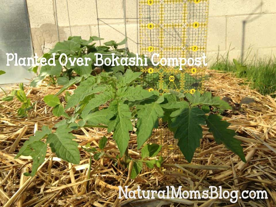 bokashi compost experiment