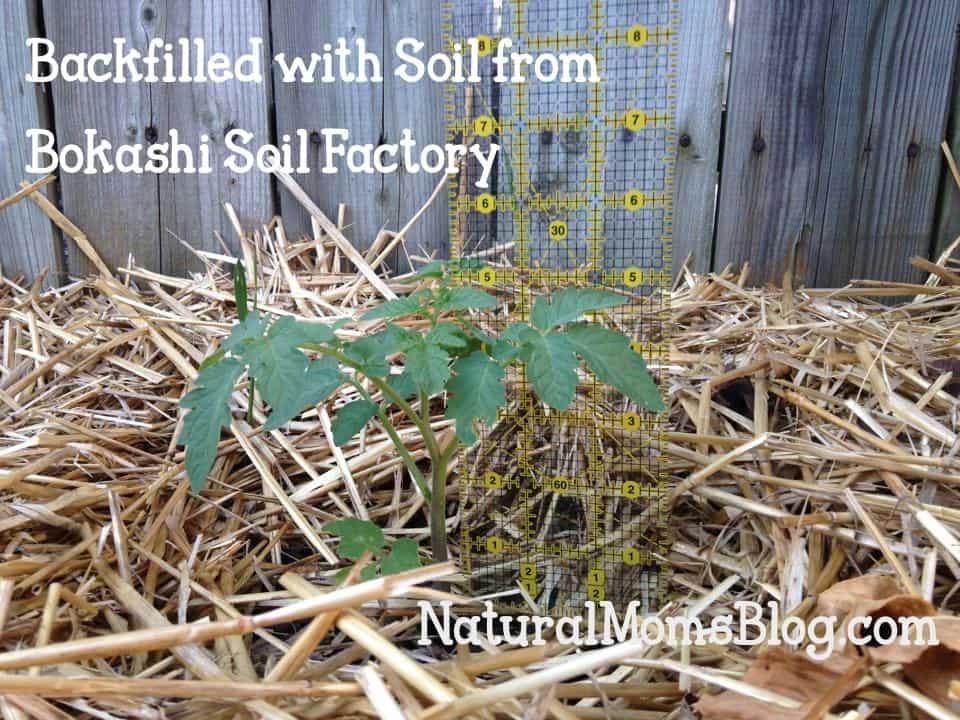 bokashi experiment soil factory