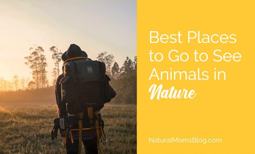 See animals in nature