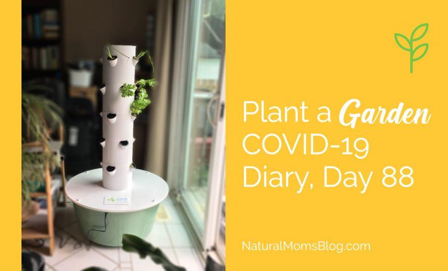 Plant a garden COVID-19