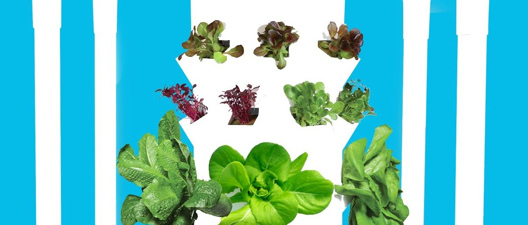 Tower Garden Micro-Greens Extension Kit