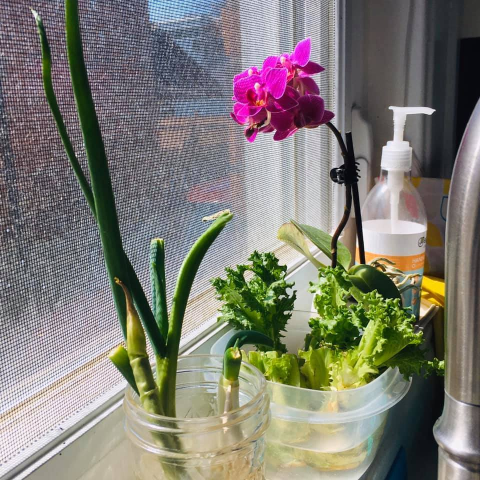 Regrow Kitchen Scraps