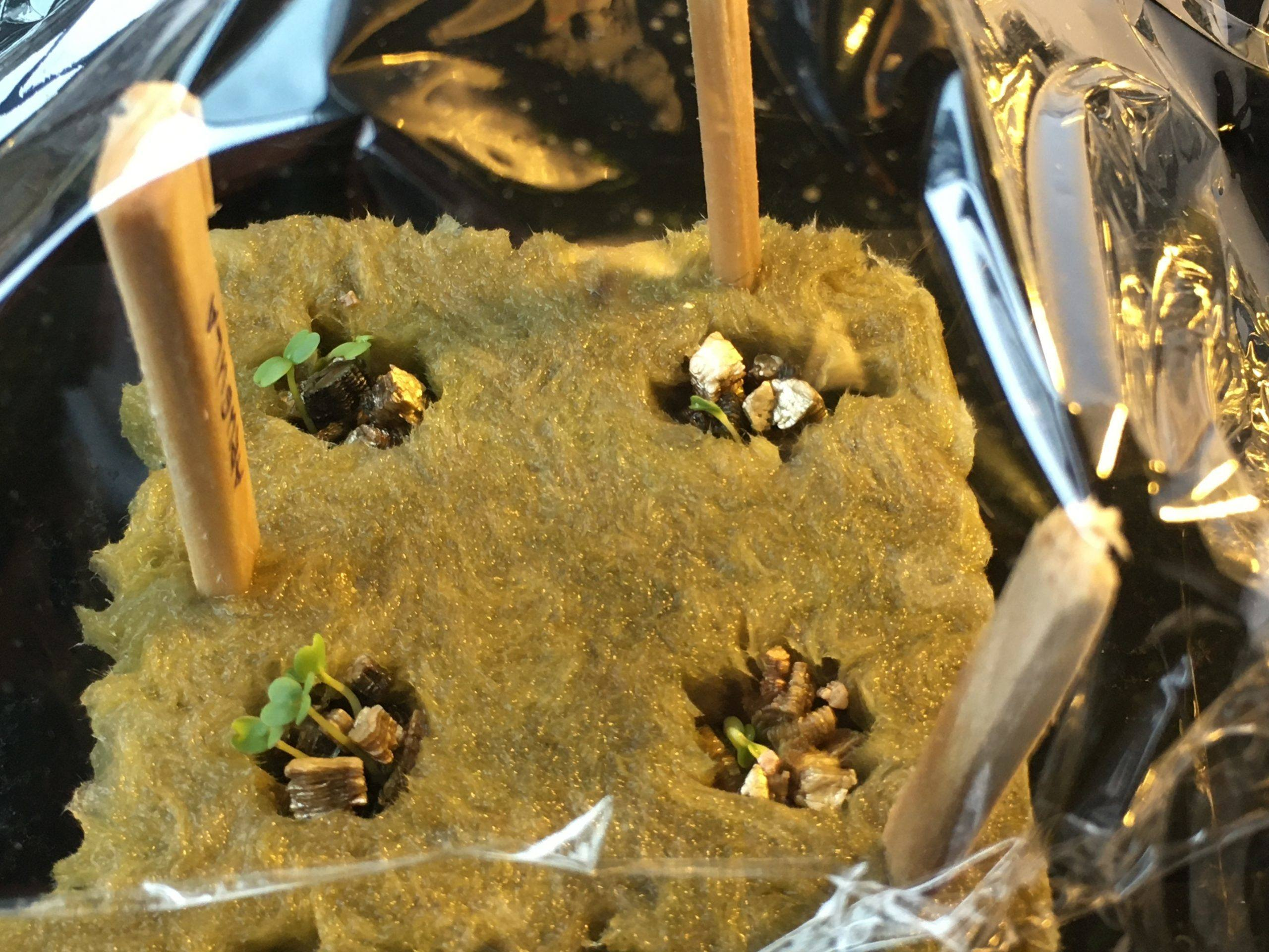 Tower Garden seed starter kit