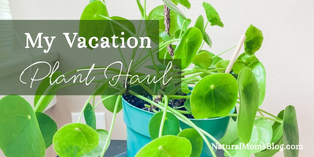 Vacation plant haul - free!